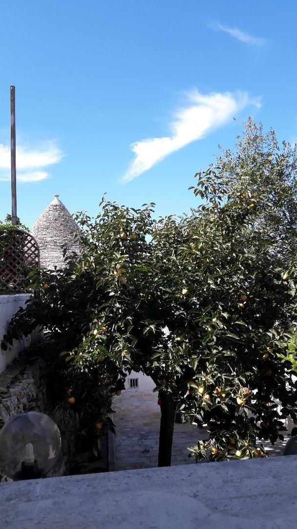 alberobello-maslini
